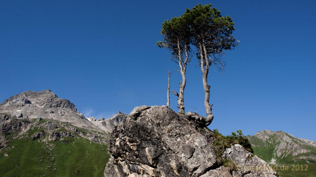 Strahlend schöner Tag und Bäume wachsen überall