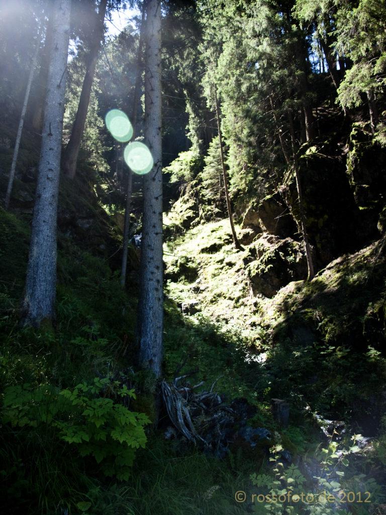 Rodenecker Wald, Impressionen 1.