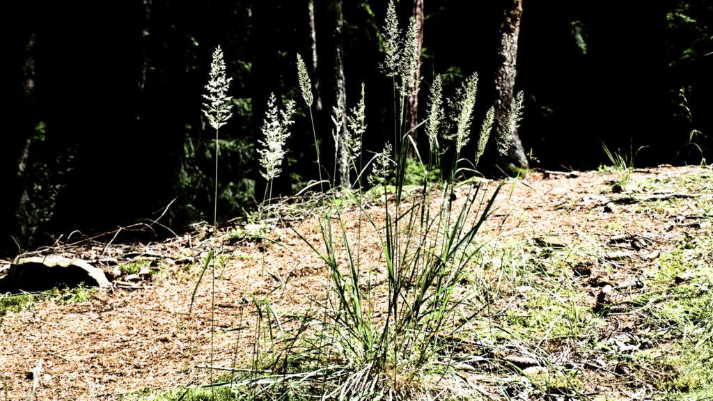 Rodenecker Wald, Impressionen 2.