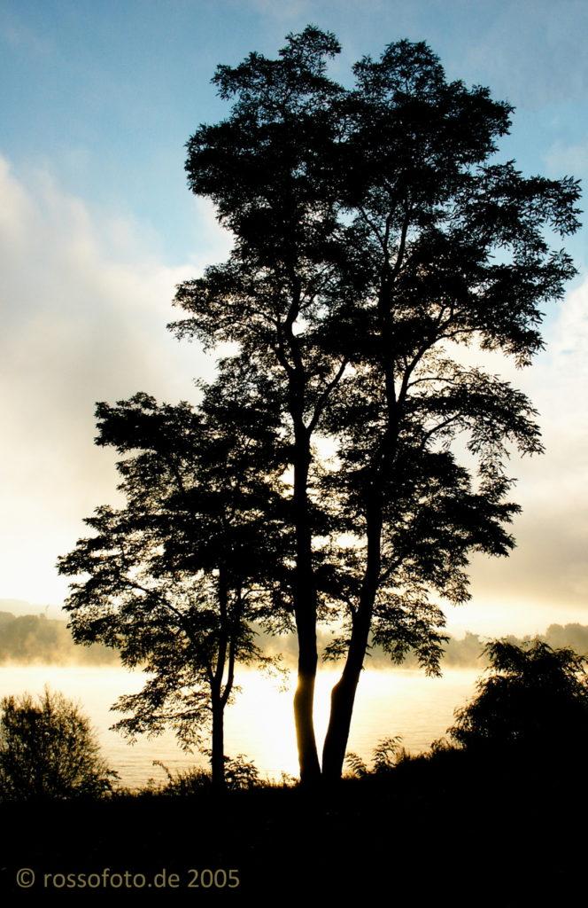 Baum im Gegenlicht.